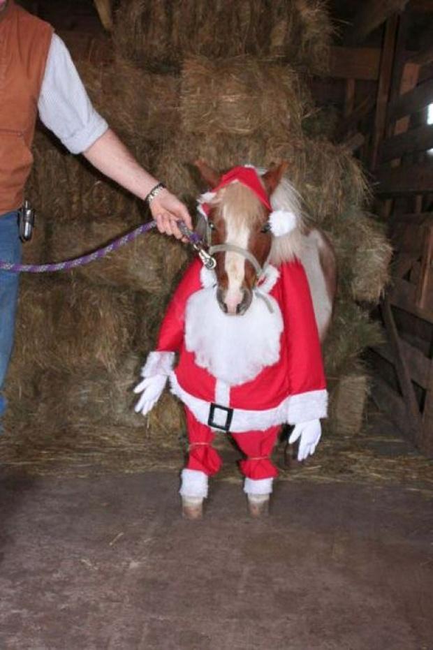 Christmas Fancy Dress Ideas Horses