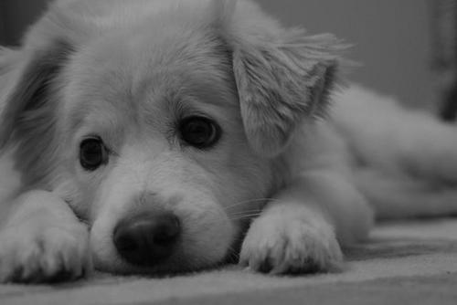 [sad_puppy]