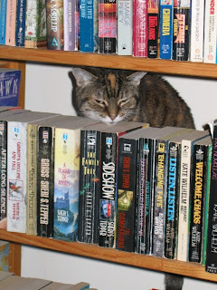 Cairo in bookcase (close-up)