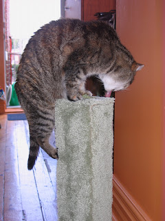 Cairo eating catnip on her scratching post
