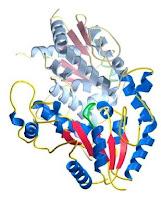 Estructura tridimensional de una proteina