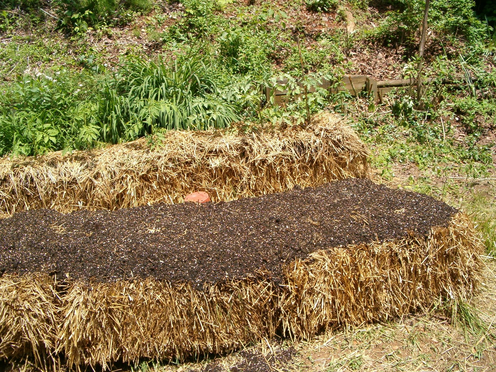 Life In The Carolina Mountains Straw Bale Garden Update