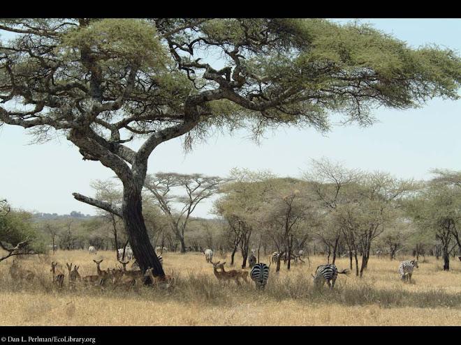 Tanzania' s Landscape