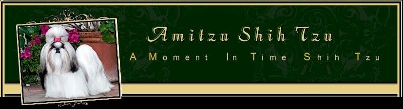 Amitzu Shih Tzu