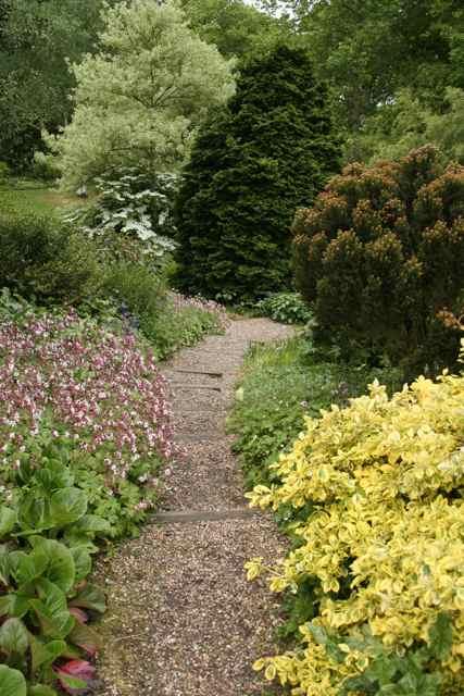 1000 images about gardening shrub border on pinterest for Shrubs for garden borders