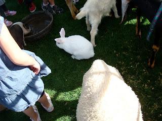 Sheep next to bunny