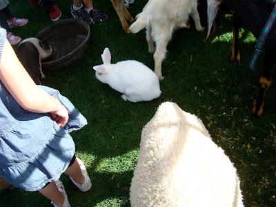 White rabbit on grass