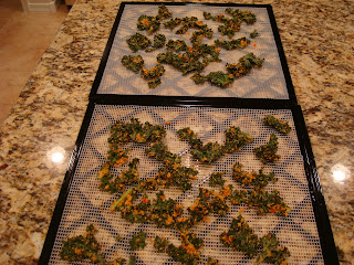 Finished dehydrated kale on dehydrator trays on countertop