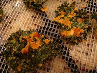 Close up of finished dehydrated kale on dehydrator trays on countertop