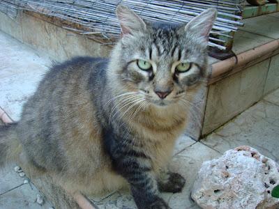 Stray cat on steps