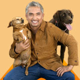Entrevista com o Encantador de Cães Cesar Millan