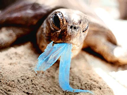 turtle with a plastic bag
