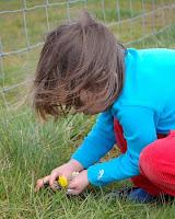 Rebecca picking dandelions