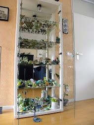 Kikkerverzameling