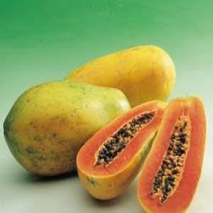 """panduan-budidaya-tanaman-buah-pepaya-natural-nusantara-distributor-nasa-pupuk-organik-cara-pemesanan-produk"""