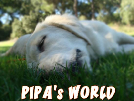 Pipa's World