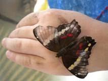 Vlinder op Soleine's hand