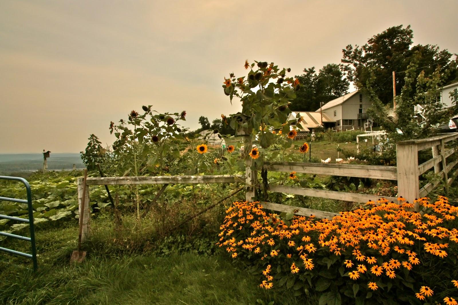 berryfields-farm-view.JPG