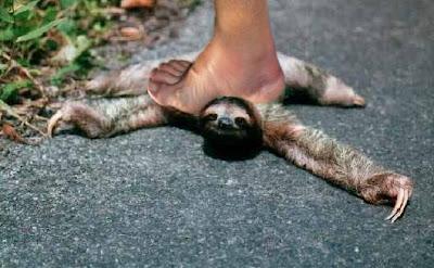 smashing sloth