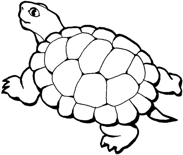 Sea Turtle Coloring Pages Free