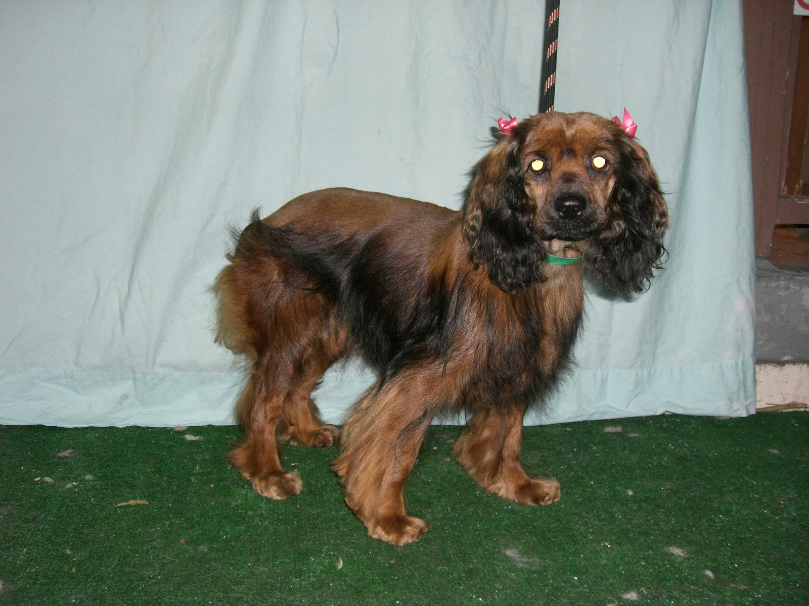 Cocker Spaniels Formerly In Shelters Departures From Downey Shelter