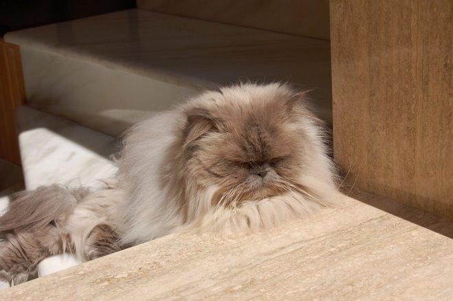 Mi piace rillassarmi al sole..
