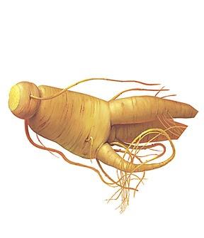 jugos para la gota acido urico signos y sintomas el acido urico produce dolor en las rodillas