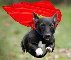 Superdog