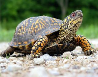 http://4.bp.blogspot.com/_LbNk-I_2edw/Skkx5Yrv7DI/AAAAAAAAA1k/byvIlmFM2_s/s400/turtle.jpg