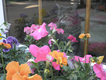 """Cats and flowers.  I hope my heaven has lots of both."" LH"