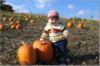 [Pumpkin.jpe]