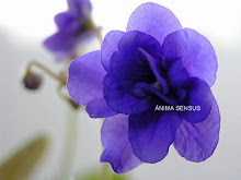 ÂNIMA SENSUS