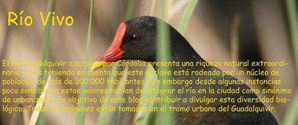 Río Vivo