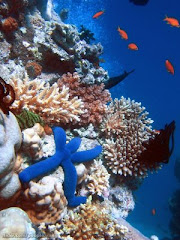 Coral Reefs of  Amoingon Coast