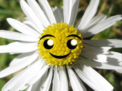 It's a kawaiified daisy!