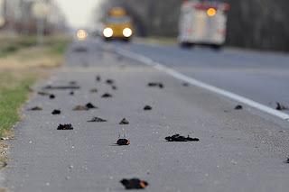lluvia de cientos de pájaros en Arkansas