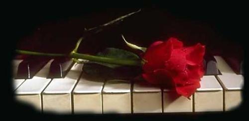 [rosa-sobre-piano.jpg]