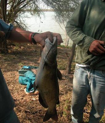 Artes de Pesca: VAMOS A PESCAR BAGRE