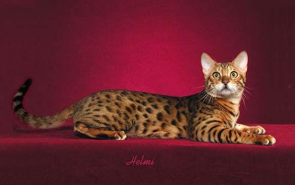 is boric acid harmful to cats