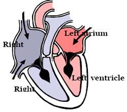 Dog heart diagram - photo#15