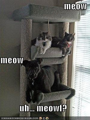 Funny Kitties 1