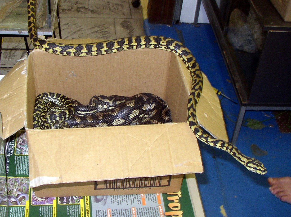 Fumbling Towards Geekdom: Snakes! In a box!