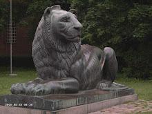 Lion devant la Basilique Sainte-Sophie