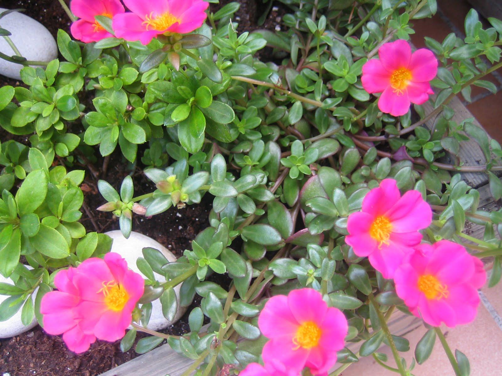 Blog de dorisalon flores de temporada for Plantas temporada
