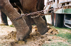 Circus's create hurtful memorys, because elephants never forget!