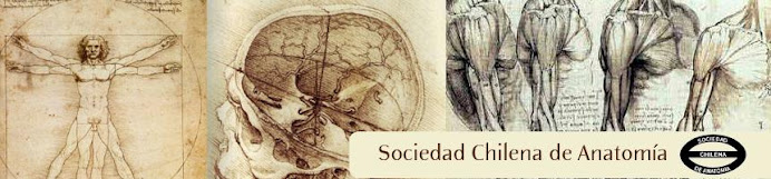 Sociedad Chilena de Anatomía