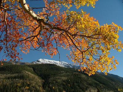 Autumn Color on Cinnamon Pass