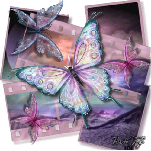 Imagenes de mariposas de movimiento - Imagui