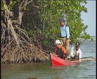 Mangrove Karimunjawa (Wisata Jepara)