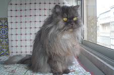 A minha maravilhosa gatinha!!!